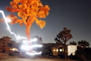 Light trails around a tree in Joshua Tree National Park