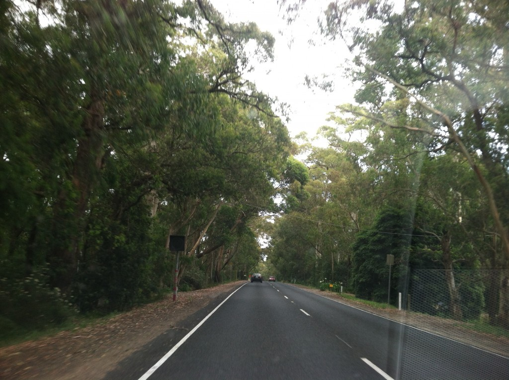 There are lots of beautiful tree-lined roads in the area.