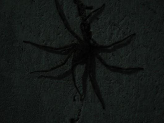 IMG_0508-ghana-large-spiders