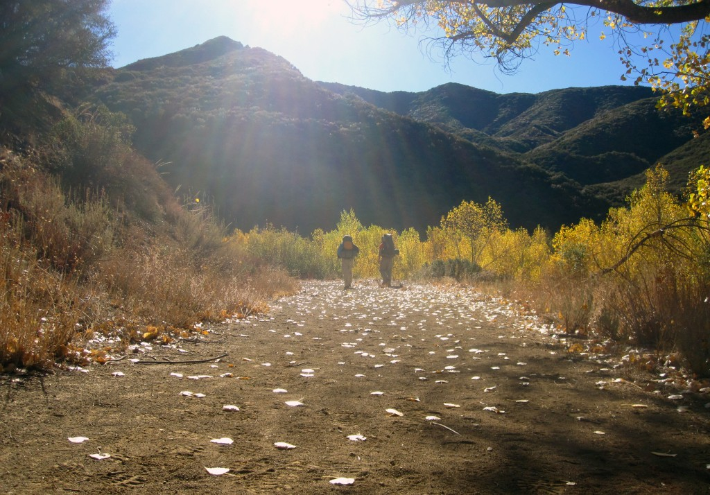 Scattered yellow leaves, Sespe Creek