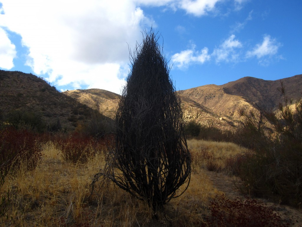 Witch pod looking things along the Sespe Creek Trail