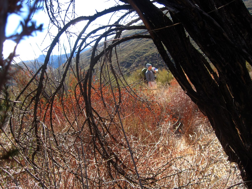 Paul, through a writhing blackened branch along the Sespe Creek Trail in Ojai
