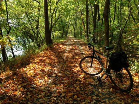 Fall leaves on the Canal Trail outside of Little Orleans, MD
