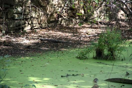 Green water along C&O Canal