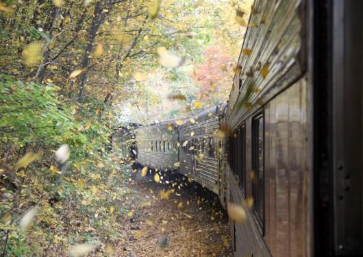 IMG_3020-train-autumn-leaves