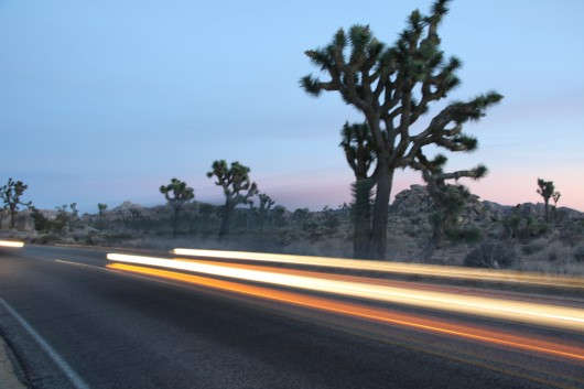Car headlights at dusk in Joshua Tree